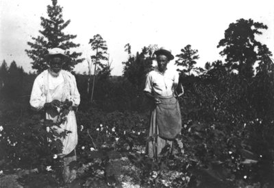 Digital image of black and white photograph taken in the late 19th century, scanned by the University of Georgia Libraries in 1999 as part of GALILEO.||Photograph of African American man and woman standing in a cotton field.